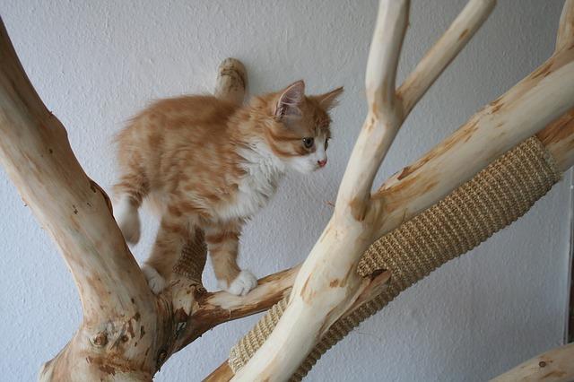 Katze sitzt auf dem deckenhohen Kratzbaum